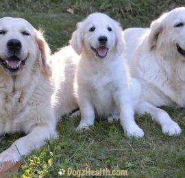 Antibiotics for Dogs