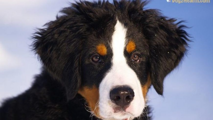 Canine Diarrhea