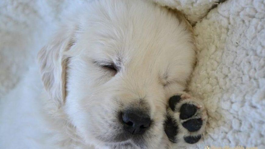 Common Canine Illnesses