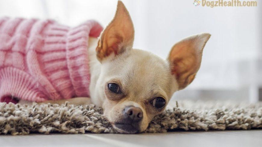 Canine Pneumonia