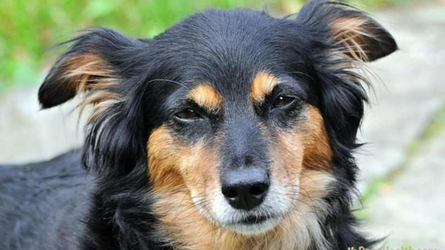 Dog Cancer Treatment