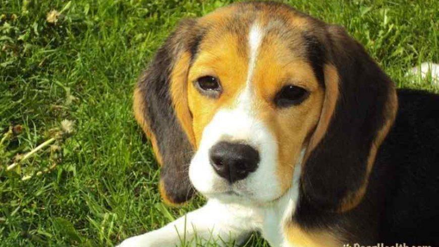Dog Diarrhea Cures