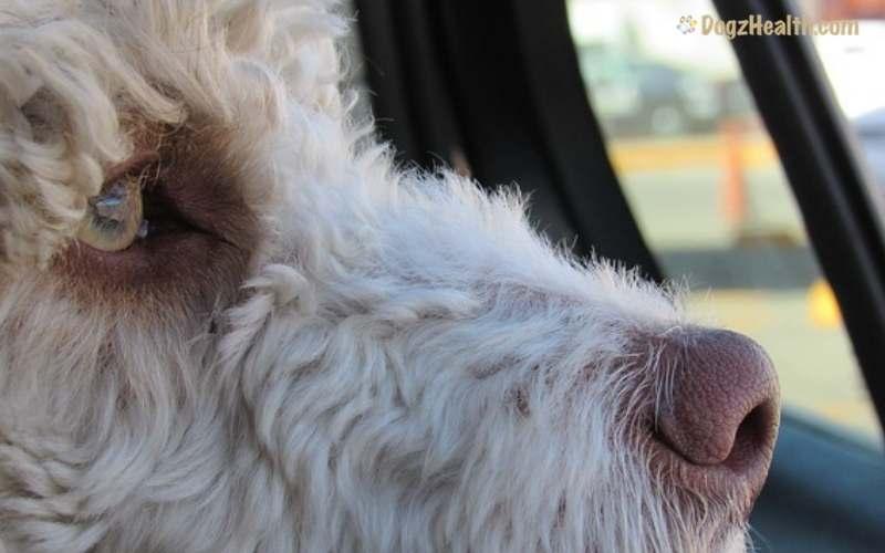 Dog Motion Sickness