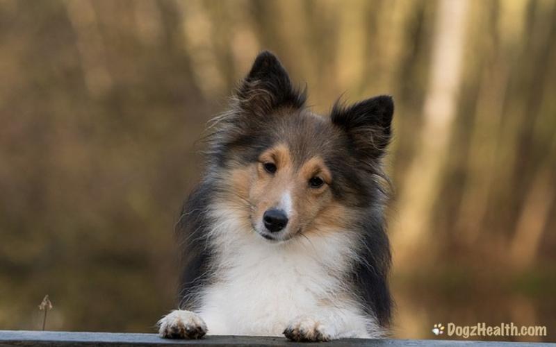 Flatulence in Dogs