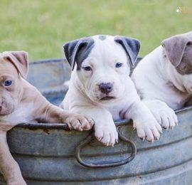 Puppy Health Concerns