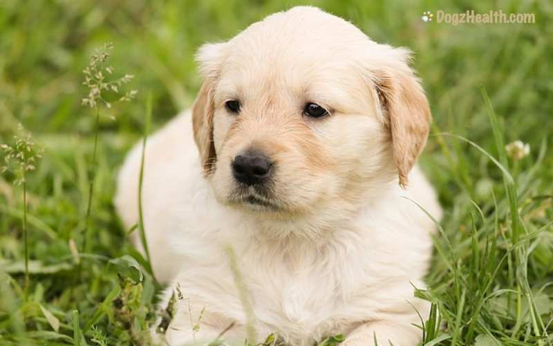 Separation Anxiety in Puppies