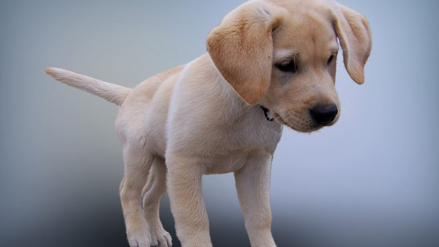 Dog Separation Anxiety Medication & Remedies