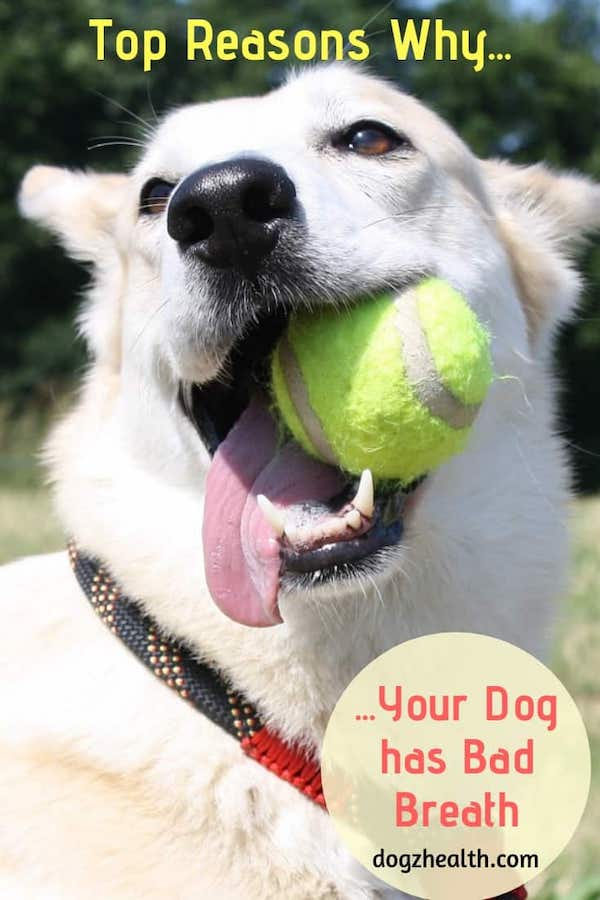 Bad Breath in Dogs Causes