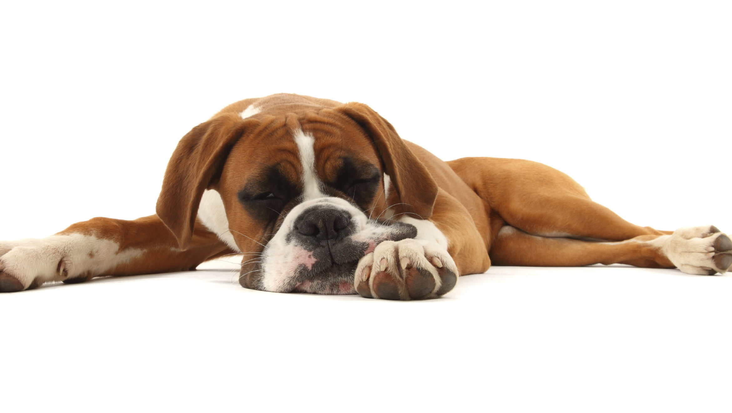 Is Your Dog Lethargic ?