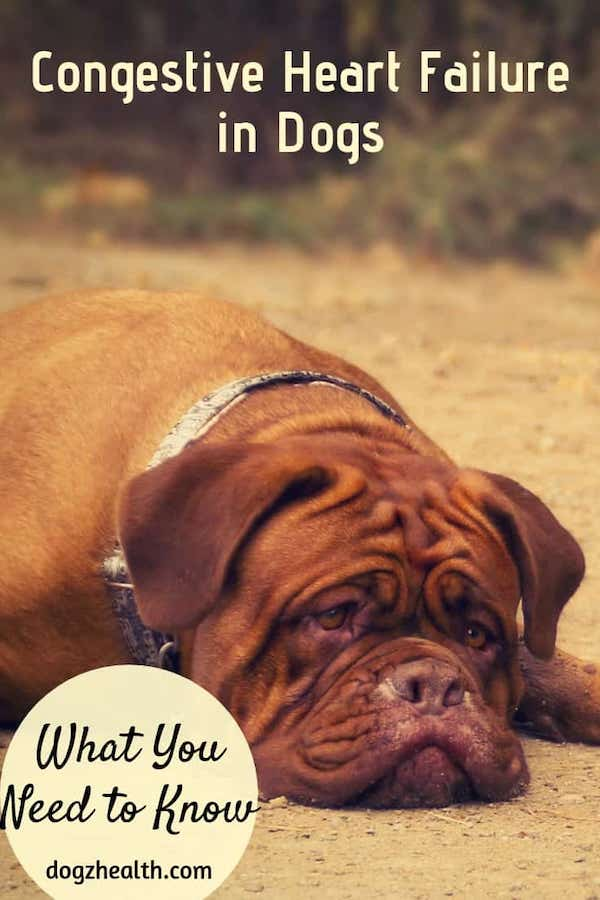 Canine Congestive Heart Failure
