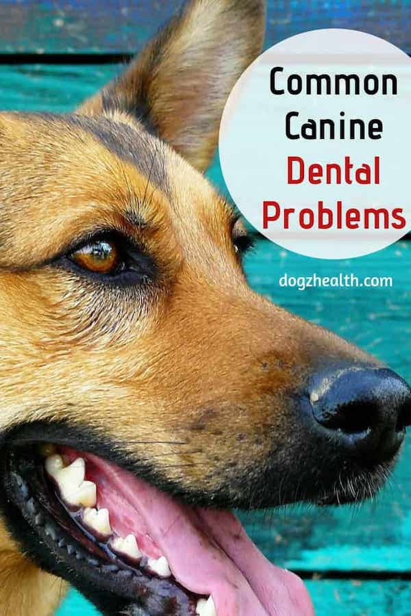 Canine Dental Problems