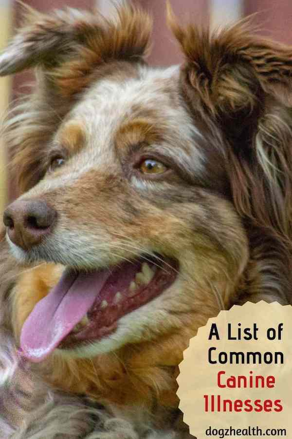 Index of Canine Illnesses