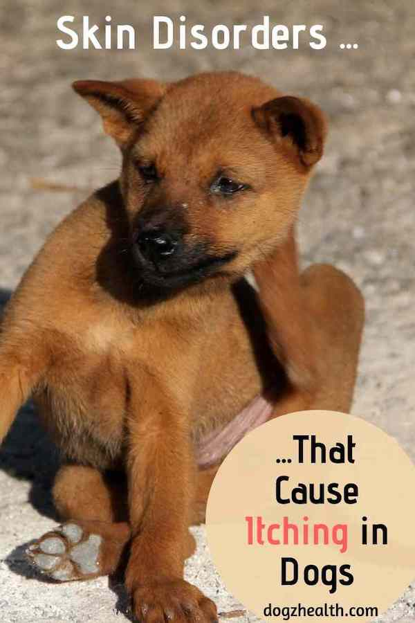 Canine Itching Causes