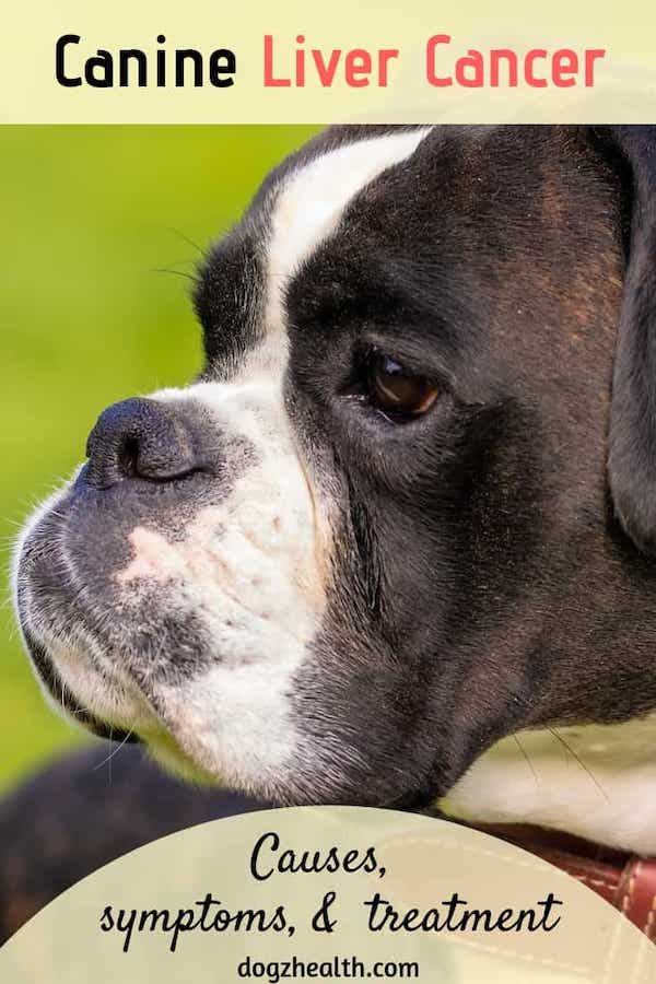 Canine Liver Cancer