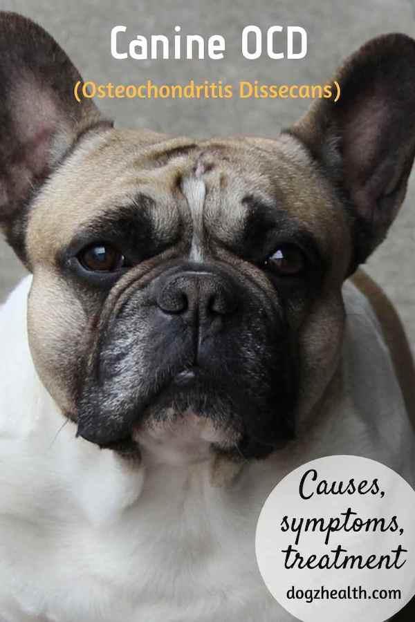 Canine OCD