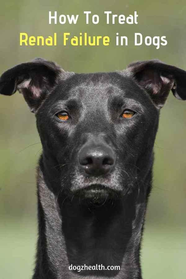 Canine Renal Failure