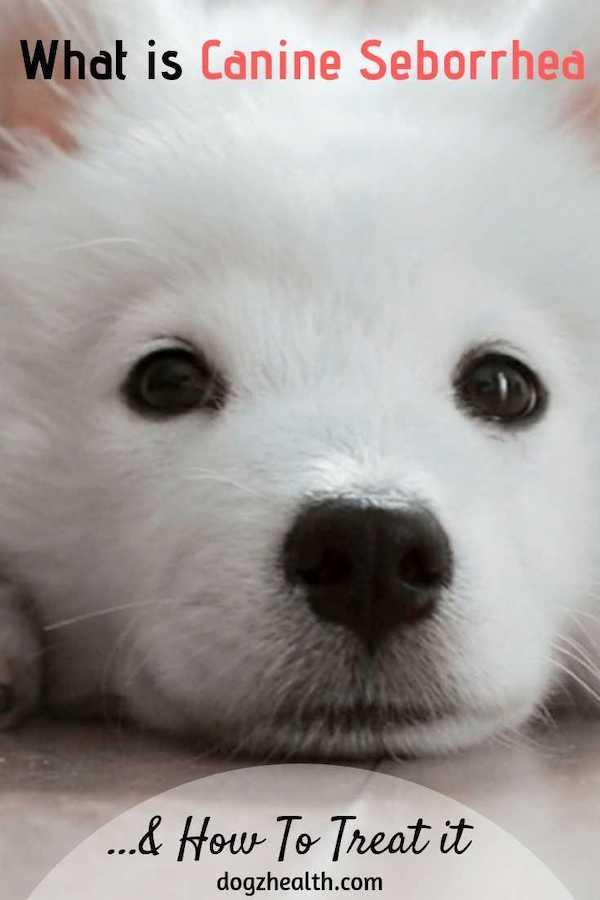 Canine Seborrhea