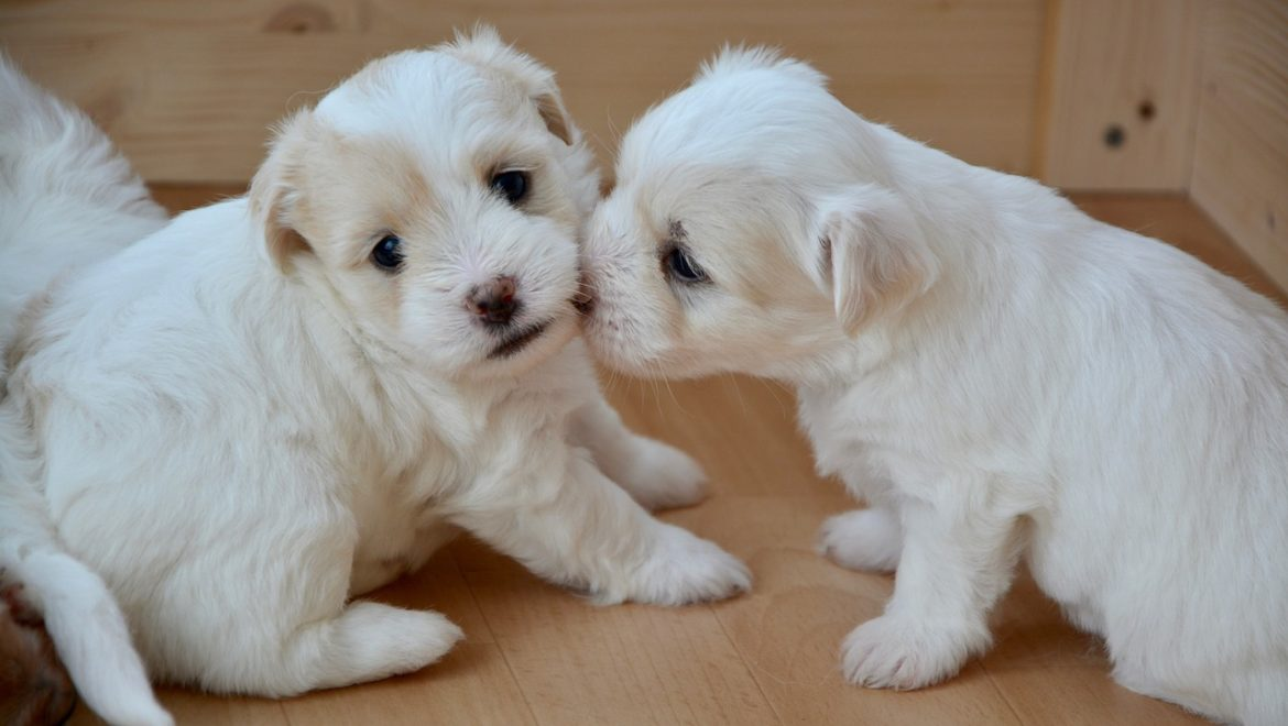 Stop Puppy Biting
