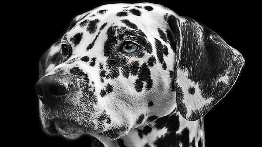 Aging Dog Care