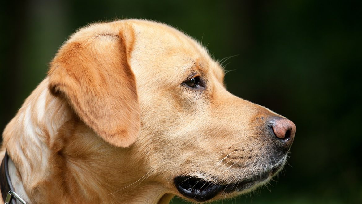 Cancer Treatment for Dog Patients