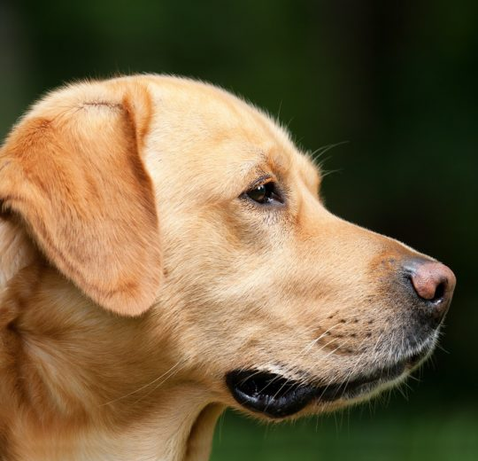Natural Osteoarthritis Treatment For Dogs