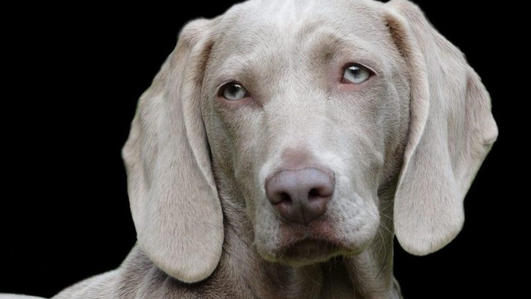 Canine Bowel Incontinence