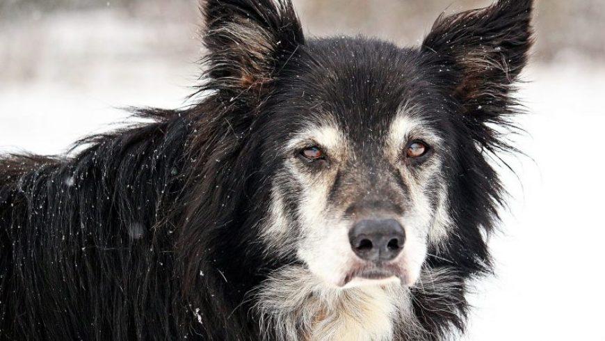 Canine Prostate Cancer