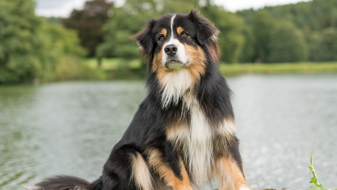 Remedies for Dog Allergies
