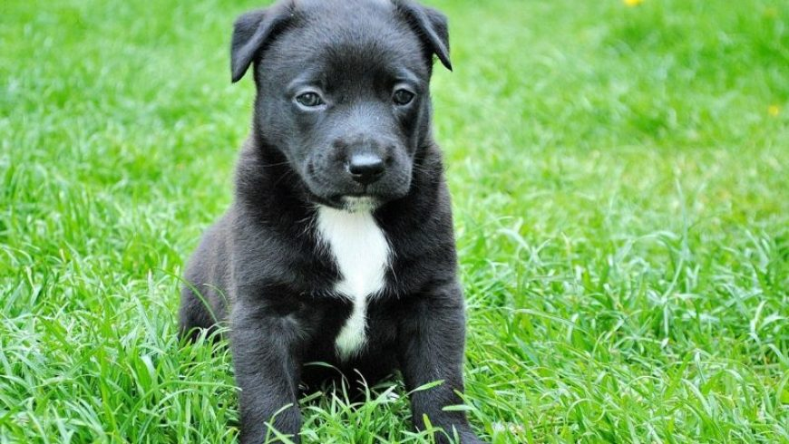Canine Heartworm Symptoms and Prevention