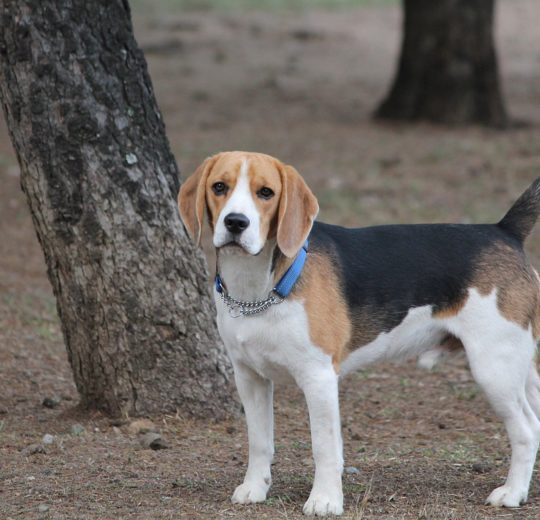 Weight Loss in Dogs