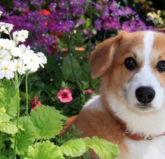 Types of Dog Cancer