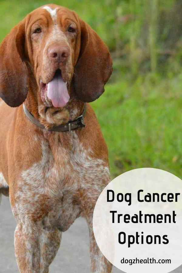 Dog Cancer Treatment Options