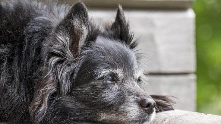 Dog Diseases and Symptoms