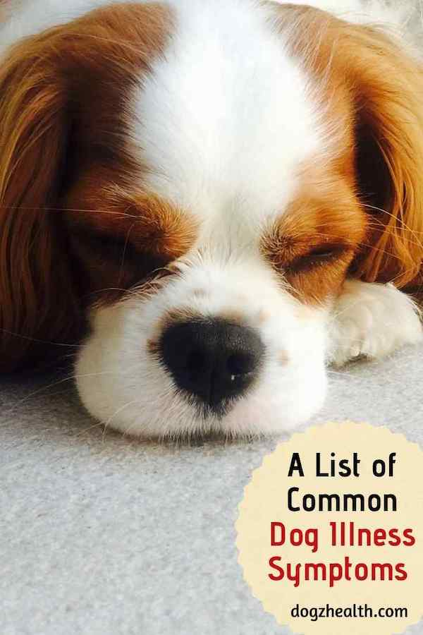 Dog Diseases and Symptoms A-Z