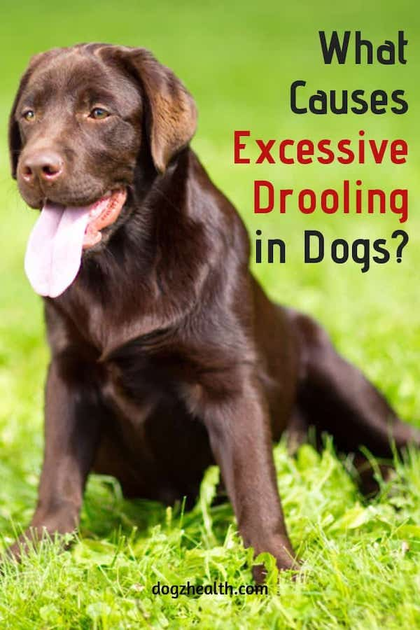 Dog Drooling Causes
