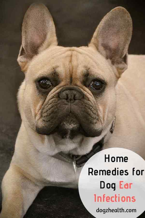 Dog Ear Infection Home Remedies