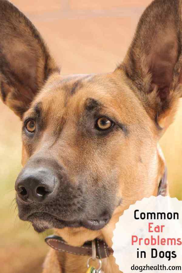 Common Dog Ear Problems