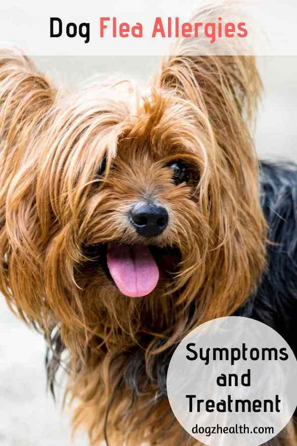 Dog Flea Allergies