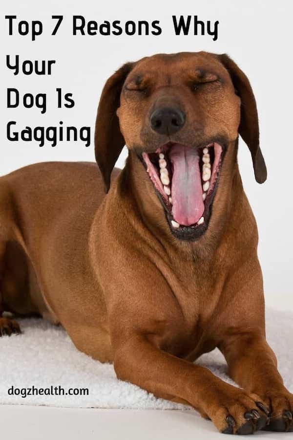 Dog Gagging