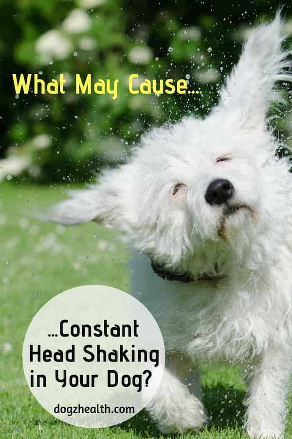 Dog Shaking Head | Why Is My Dog Shaking His Head All The Time?