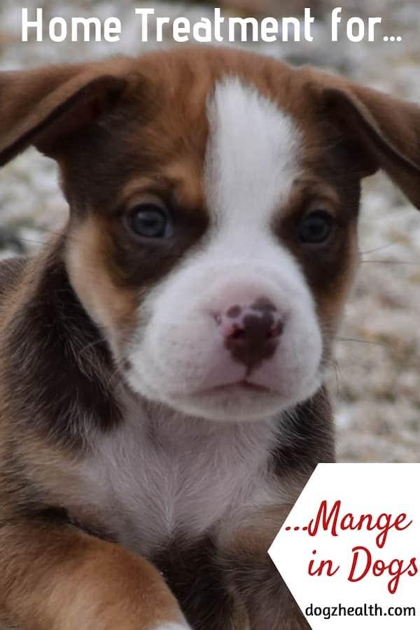 Dog Mange Treatment at Home