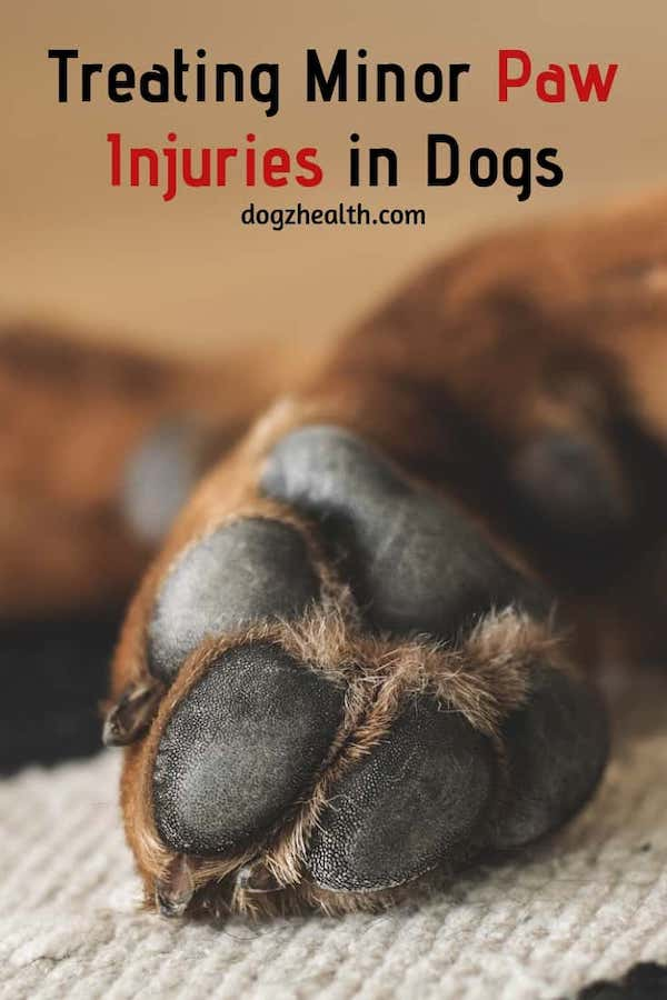 Treating Minor Dog Paw Injuries