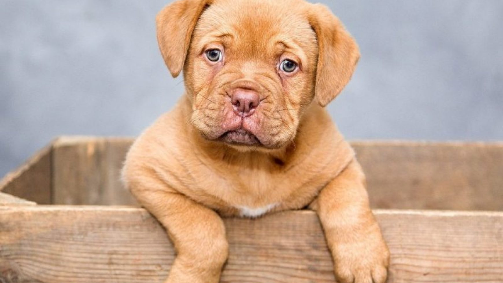 puppy constipation causes | how to relieve constipation in puppies