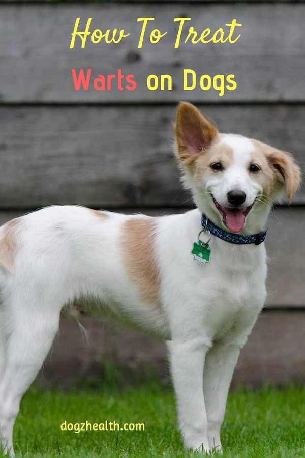 Dog Warts Treatment