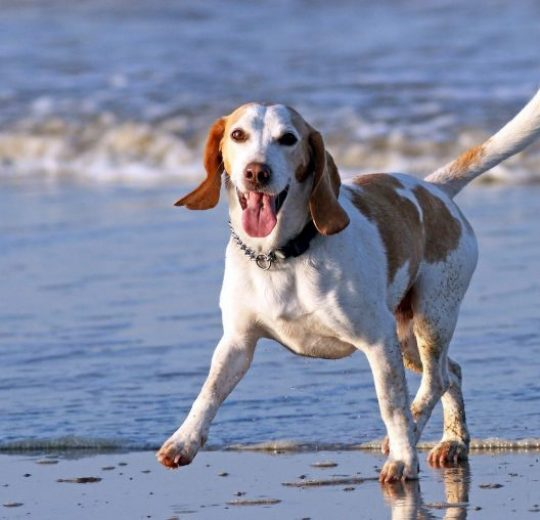 Enzymes for Dogs