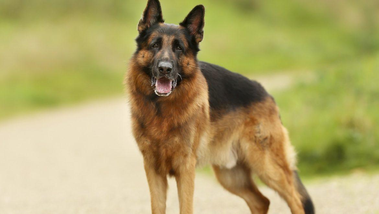 Canine Degenerative Myelopathy