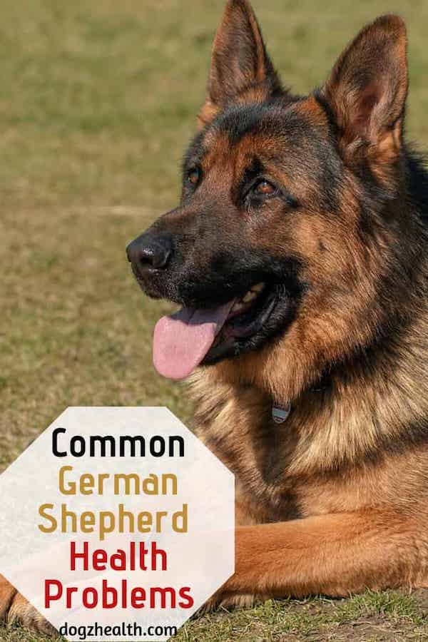 Common German Shepherd Health Problems