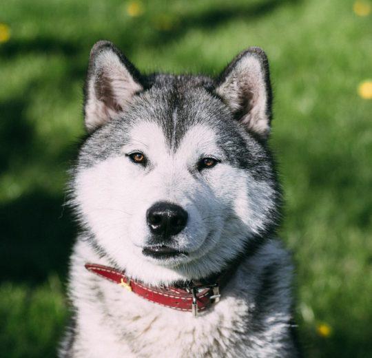 Giardia in Dogs