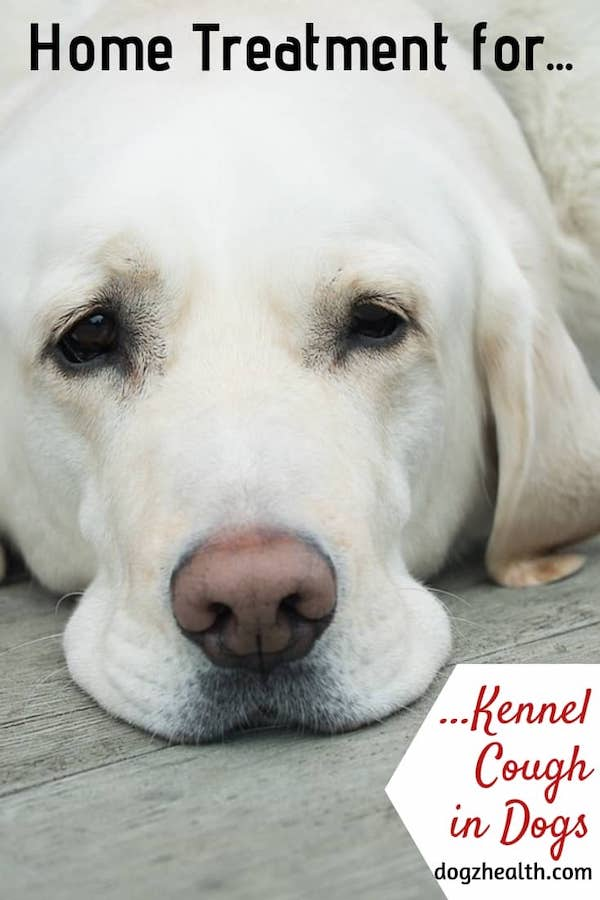 Home Treatment for Kennel Cough