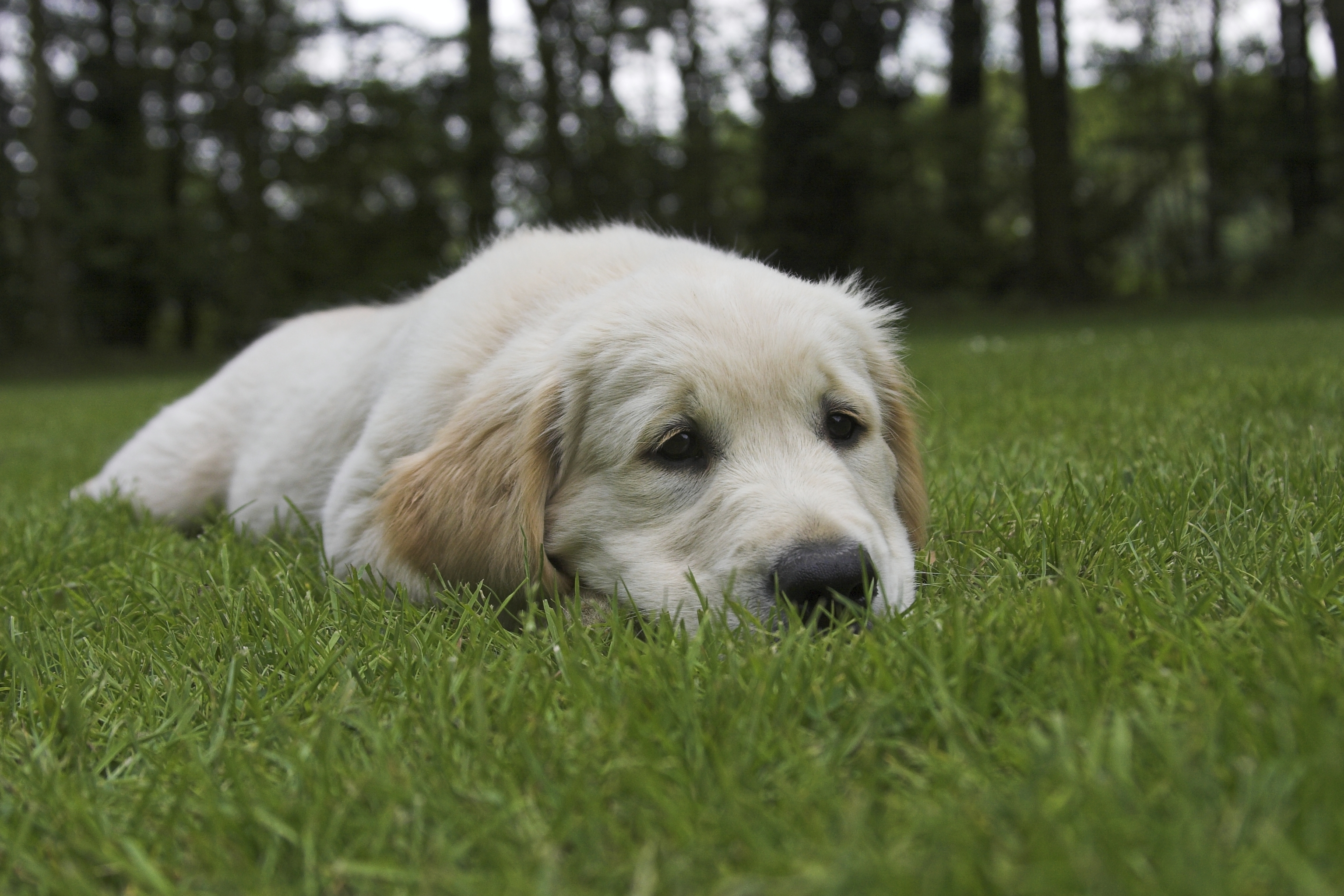 Dog Runny Nose   Causes of Runny Nose and Nasal Discharge in Dogs